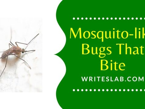 All You Should Know about Mosquito-like Bugs That Bite