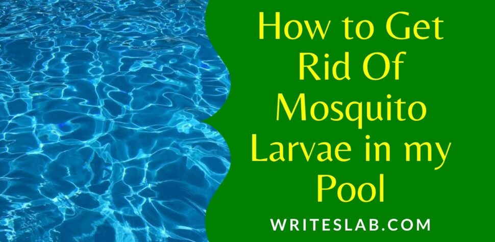 How to Get Rid Of Mosquito Larvae in my Pool