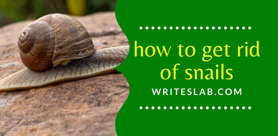 Ways on how to get rid of snail pests
